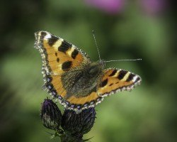 Some butterfly photos for you